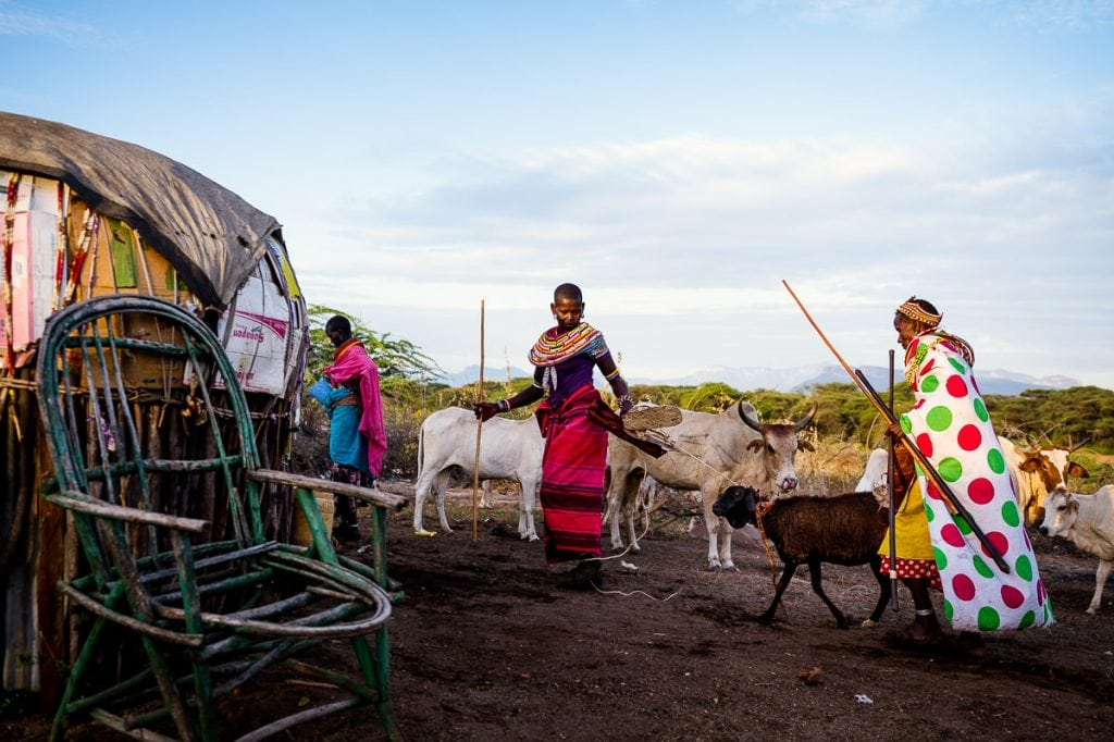 Samburu wedding black sheep offering.
